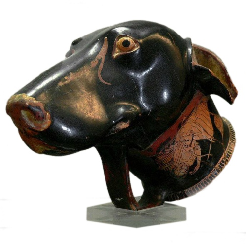 Brygos - Rhyton [drinking vessel] in the shape of a dog's head (early 5th century BC) white background