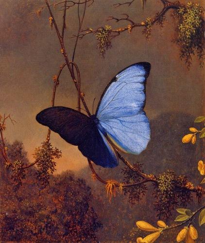 Martin Johnson Heade - Blue Morpho Butterfly (c. 1864)