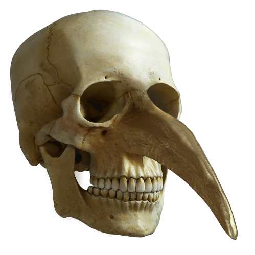 Skull with Snout
