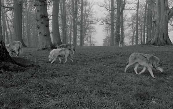 Steve Hathaway - American Wolfpack in Beanham, UK (2009)