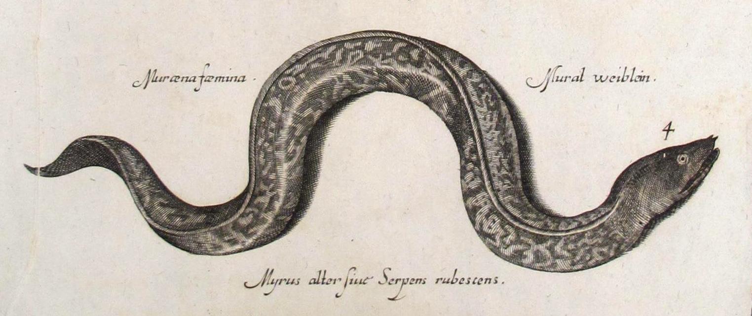 Sea Serpents and Eels - Italian, 17th Century [detail]