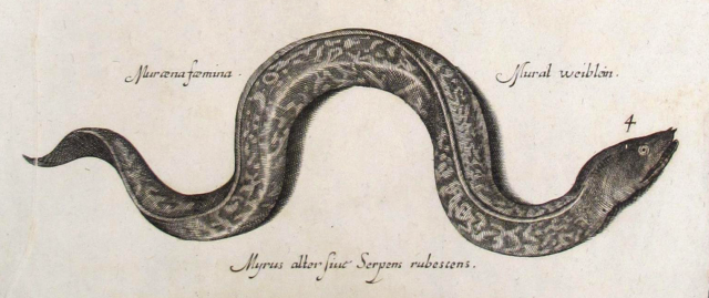 Sea Serpents and Eels - Italian, 17th Century [detail]