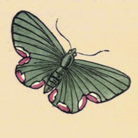 Phalaena Ditaria - The Maid of Honour Moth