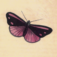 Phalaena Jacobaeae - Pink Under-Wing Moth
